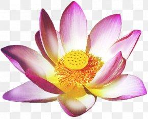 Huji Flower Vector - Faith Healing Health Reiki Lotus Thai Massage PNG