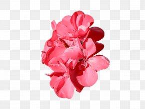 Pink Family Magenta - Pink Petal Flower Plant Cut Flowers PNG