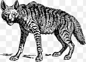 Drawing Animals - Striped Hyena Spotted Hyena Clip Art PNG