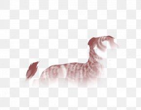 Kitten - Kitten Whiskers Tabby Cat Ragamuffin Cat Norwegian Forest Cat PNG