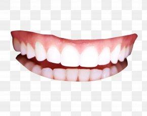 Teeth - Human Tooth PNG