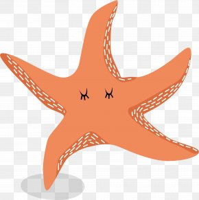 Red Starfish Vector - Starfish Euclidean Vector PNG