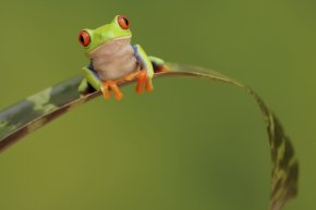 Frog - The Celebrated Jumping Frog Of Calaveras County Quotation Desktop Wallpaper The Frog Prince PNG