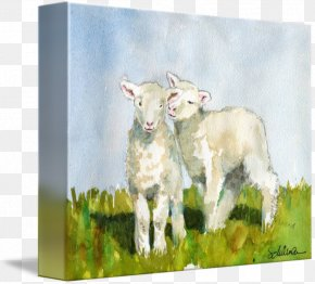 Watercolour Animals - Goat Cattle Sheep Caprinae Painting PNG
