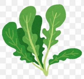 Rucola - Nabemono Herb Italian Cuisine Spring Greens Food PNG
