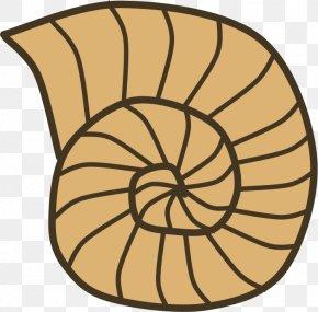 Shell - Gastropod Shell Seashell Snail Mollusc Shell Clip Art PNG
