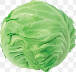 Cabbage Image - Red Cabbage Cauliflower Chinese Cabbage Clip Art PNG