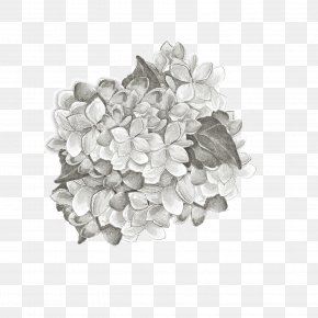 Grey Plant Cultivation - Black And White Petal Pattern PNG