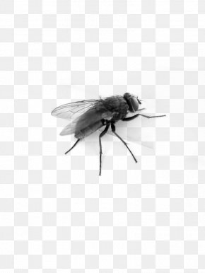 Insect - Insect Fly Clip Art PNG
