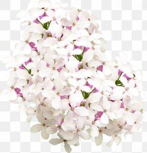 Lilac - Floral Design Lilac Flower Clip Art PNG