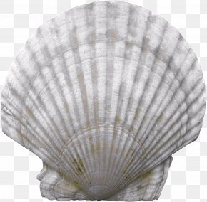 Seashell - Seashell PNG