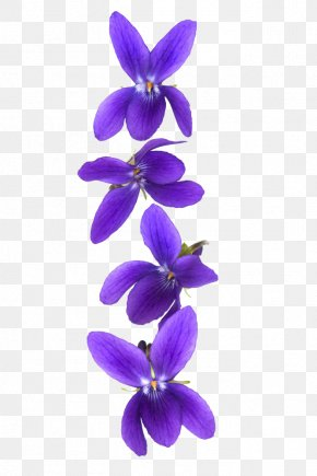 Violet Flower - Customer Violet Stock Photography PNG