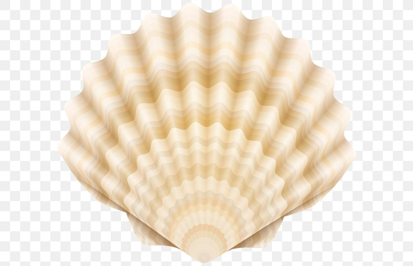Drawing Cockle Clip Art, PNG, 600x529px, Drawing, Alamy, Clam, Clams Oysters Mussels And Scallops, Cockle Download Free