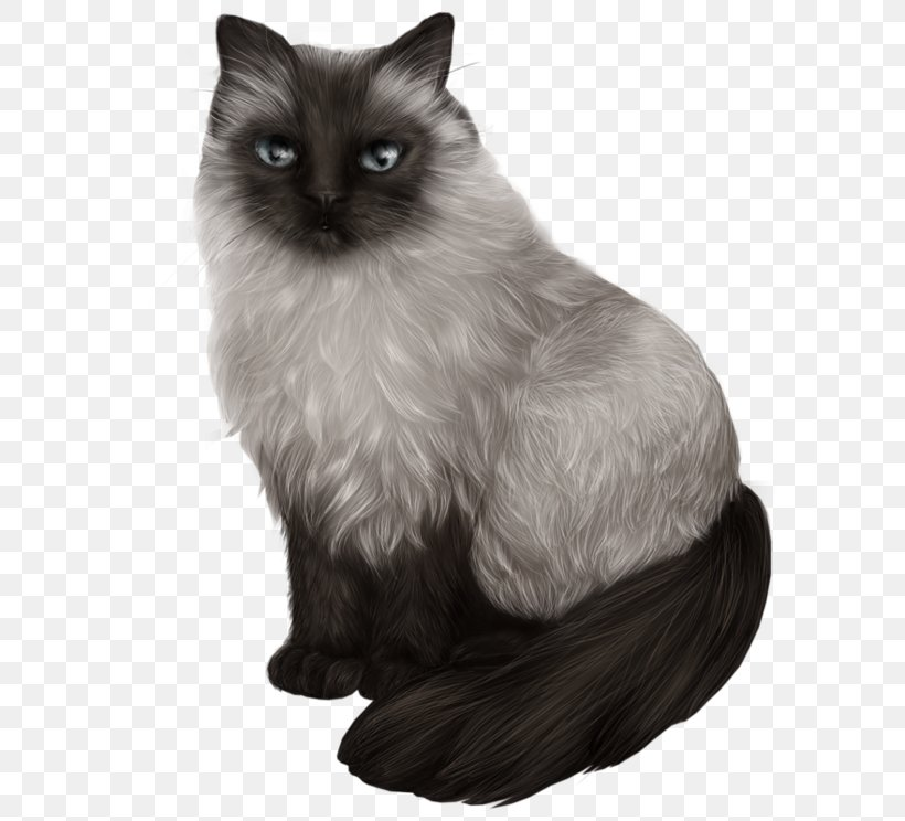Himalayan Cat Balinese Cat Siamese Cat Ragdoll Asian Semi
