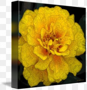 Marigold - Mexican Marigold Flower Petal Yellow Printmaking PNG