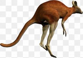 Kangaroo - Kangaroo PhotoScape PNG