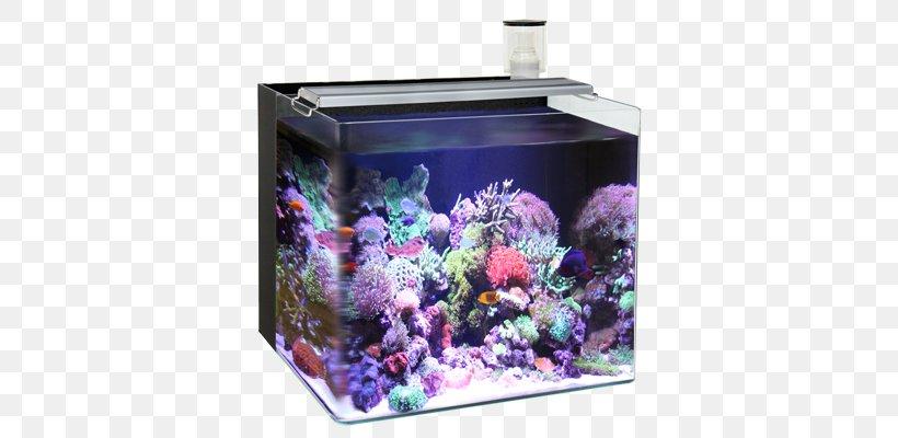 Reef Aquarium Nano Aquarium Light Liter Png 800x400px Reef Aquarium Aquarium Aquascaping Fish Lamp Download Free