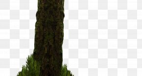 Forest - Tree Woody Plant Trunk PNG