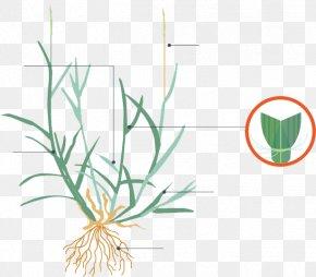 Leaf - Grasses Plant Stem Leaf Flower Clip Art PNG