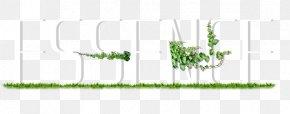 3d Alphabet - Grasses Plant Stem Leaf Tree Font PNG