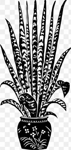 Pot Plant - Flowerpot Radiator Plants Houseplant Stock Photography PNG