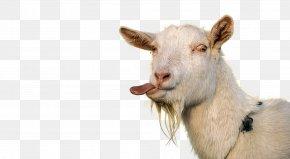Goat - Goat Sheep Tongue Caprinae Livestock PNG