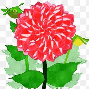 Cut Flowers Carnation - Flower Plant Dahlia Pink Petal PNG