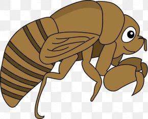 Flea - Cicadidae Flea 幼虫 Insect Clip Art PNG