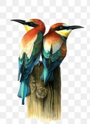 Painted Bird - Bird Visual Arts Drawing Illustration PNG