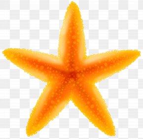 Starfish Transparent Image - Clip Art PNG