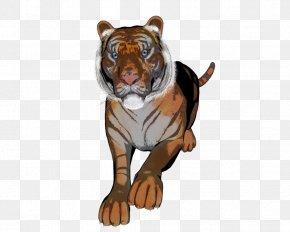 Tiger - Tiger Lion Dog Canidae PNG