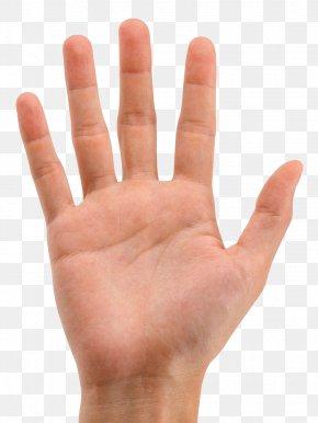 Mao - Finger Hand Digit Line PNG