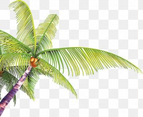 Hand-painted Cartoon Coconut Leaves - Summer Poster PNG