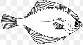 Line Drawing - Line Art Fish Drawing Flounder PNG