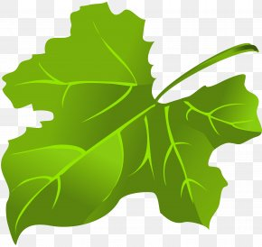 Green Leaf - Maple Leaf Green Clip Art PNG