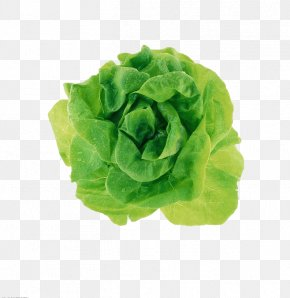 Green Cabbage - Adobe Illustrator Tutorial CorelDRAW PNG