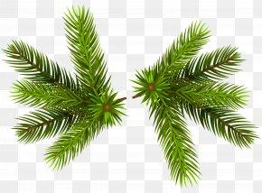 Pine Branches Transparent Clip-Art Image - Branch Pine Clip Art PNG