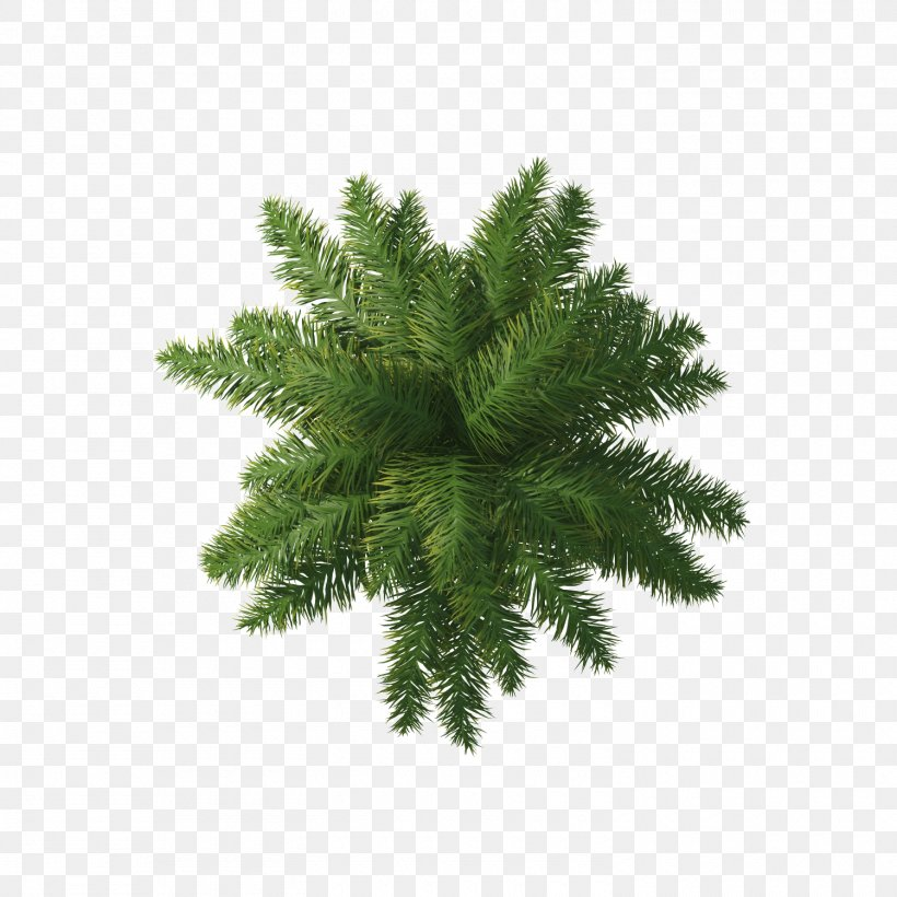 Willow Tree Arecaceae, PNG, 1500x1500px, Tree, Conifer, Evergreen, Fir, Grass Download Free
