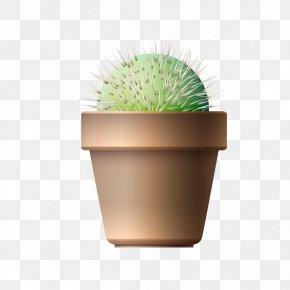Potted Cactus - Cactaceae Flowerpot Euclidean Vector Plant PNG