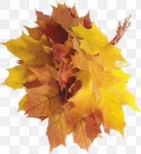 Autumn Leaves - Autumn Leaf Color PNG