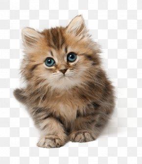 Kitten - Kitten Cat Cuteness Clip Art PNG