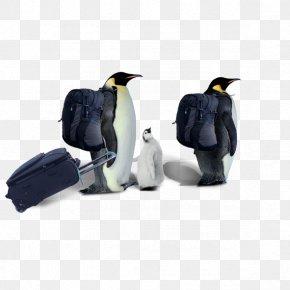 A Penguin - Penguin Razorbills Computer File PNG