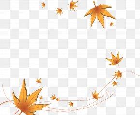 Yellow Autumn Maple Leaves - Autumn Leaf Euclidean Vector PNG