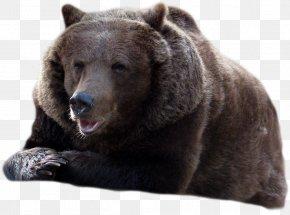 Bear - Brown Bear American Black Bear PNG
