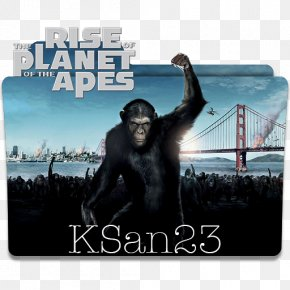 Planet Of The Apes - Planet Of The Apes YouTube Will Rodman Film PNG