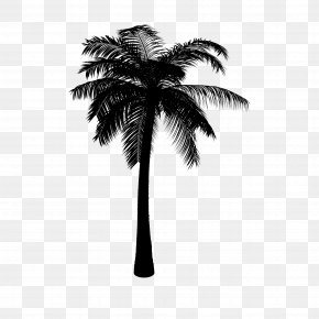 M Date Palm Palm Trees - Asian Palmyra Palm Coconut Black & White PNG