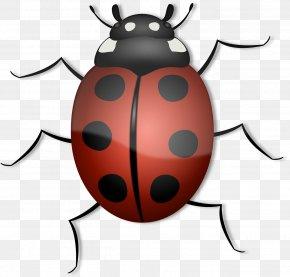 Bugs - Beetle Ladybird Clip Art PNG