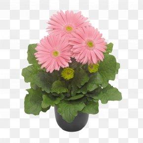 Pot Plant - Cut Flowers Floristry Floral Design Chrysanthemum PNG