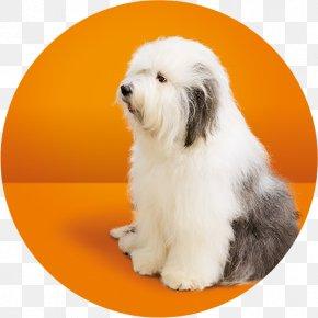 Splash Milk - Dog Breed Tibetan Terrier Old English Sheepdog Coton De Tulear Havanese Dog PNG
