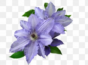 Violet - Leather Flower Stock.xchng Image Photograph Mauve PNG